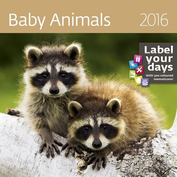 Baby Animals kalendář