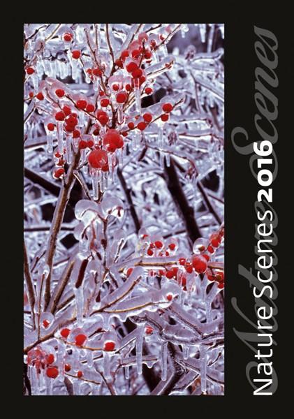 Nature Scenes kalendář